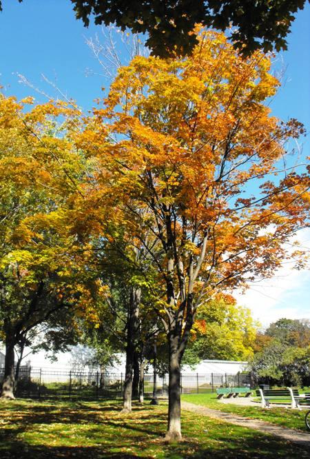 Allen Gardens autumn