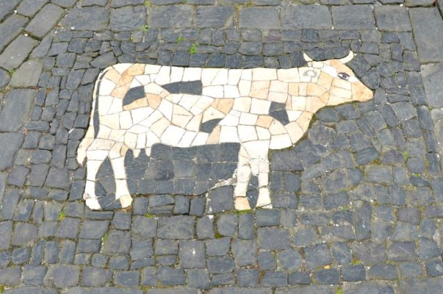 Azores - cow mosaic